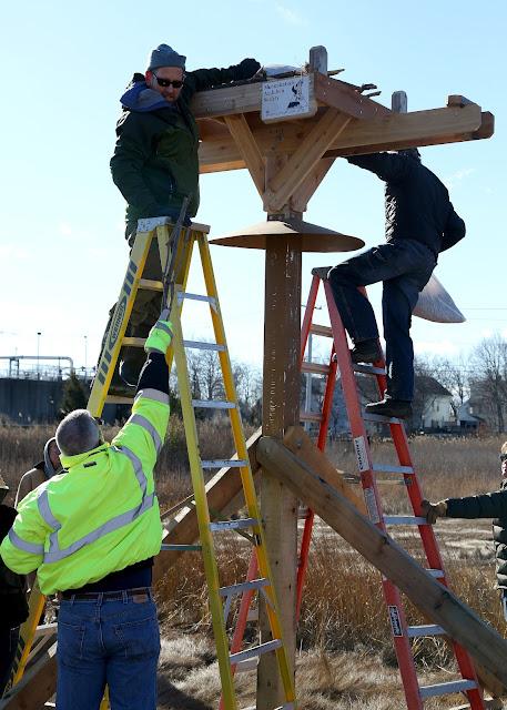 2 West Haven Osprey Platforms - 909A4334_jm.jpg