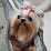 betty yorkie's profile photo
