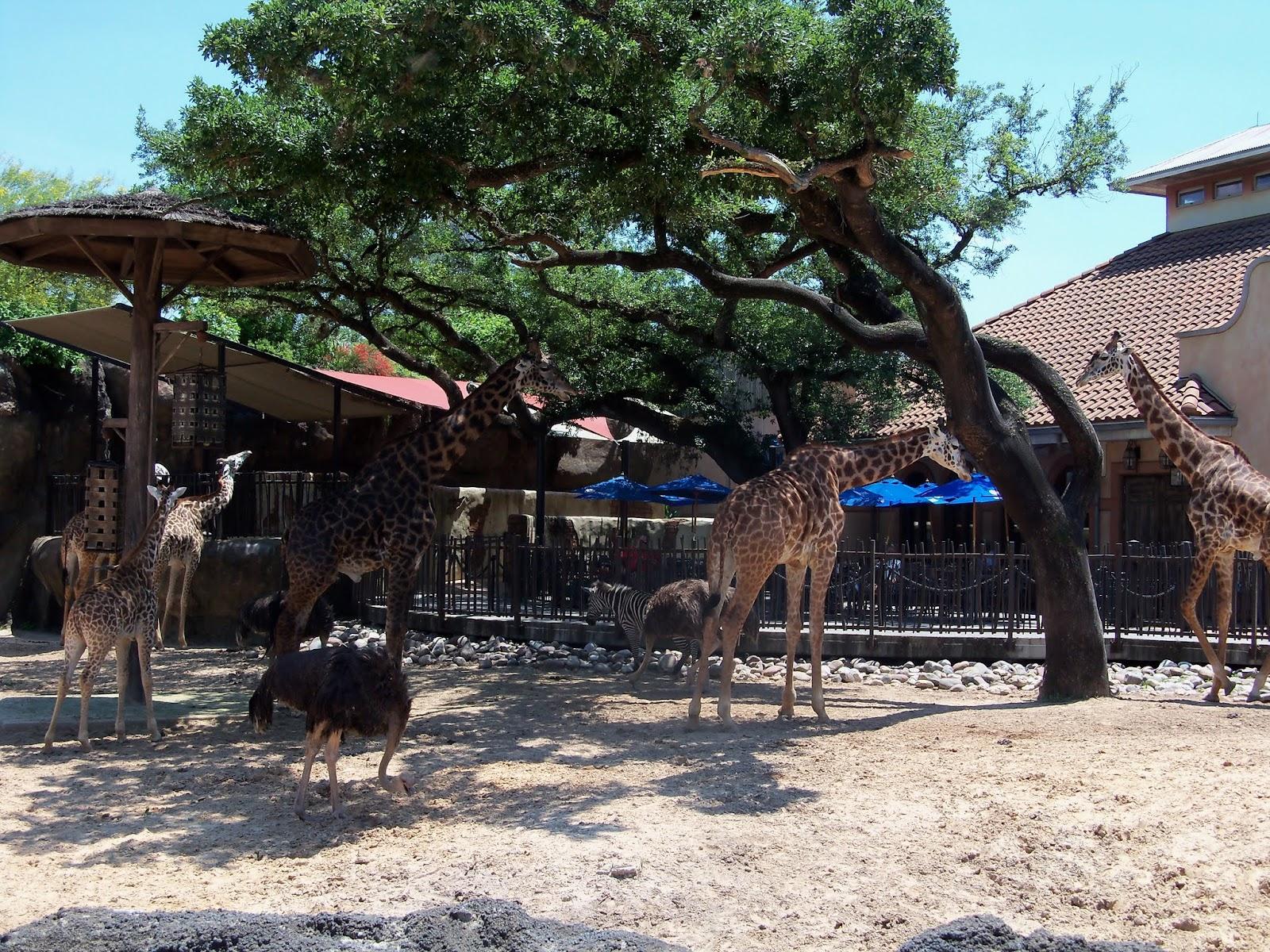 Houston Zoo - 116_8583.JPG