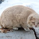 Меня провожали очень внимательным взглядом местные коты...