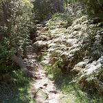 Ferns around track (30787)