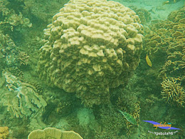 pulau harapan taun baru 2015 pan 01