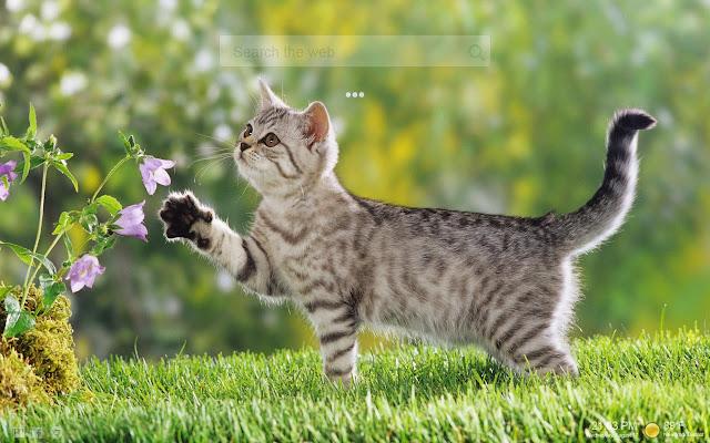 Cute Kittens Backgrounds