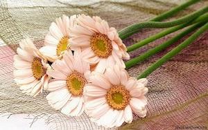 imagini-cu-flori.jpg
