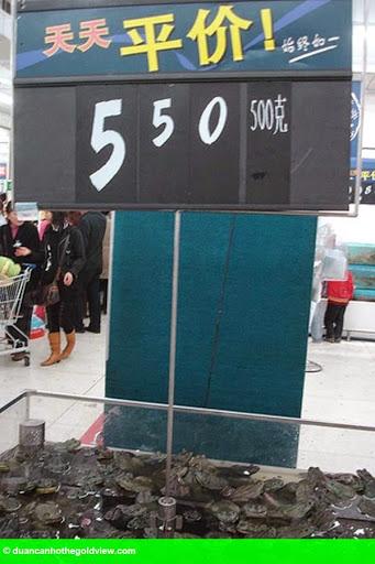 Hình 6: Hãi hùng cá sấu nguyên con, cá mập được bày bán trong siêu thị