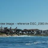 DSC_2383.thumb.jpg