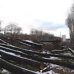 Вырубки ЛЭП в Воронежской Нагорной Дубраве 034.jpg
