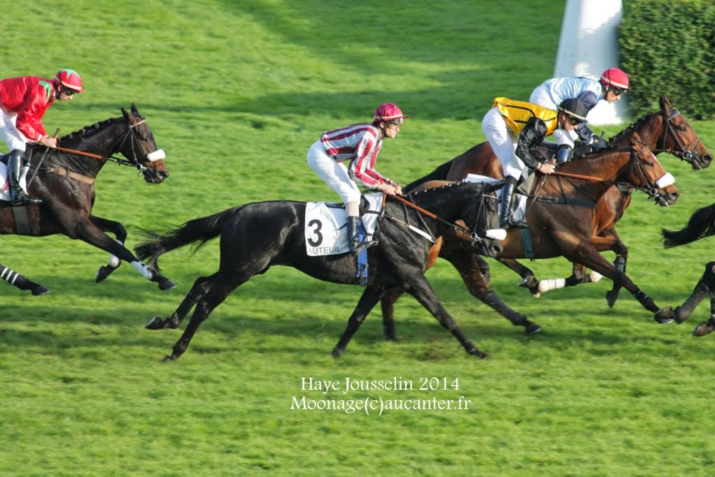 Photos Auteuil 2-11-2014 (48h de l'obstacle) IMG_5636