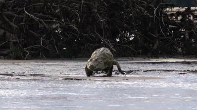 CrocodileLarge 2