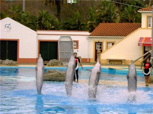 Дельфинарий Лиссабон выход дельфинов фото