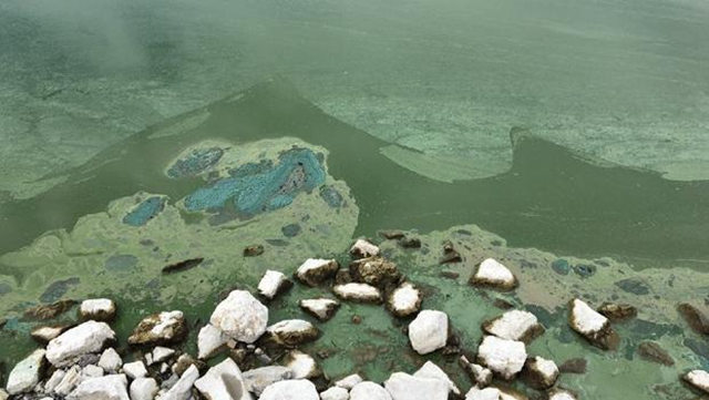Utah Lake, covered in dangerous algae, 22 July 2016. The huge toxic algae bloom in Utah has closed one of the largest freshwater lakes west of the Mississippi River, sickening more than 100 people and leaving farmers scrambling for clean water during some of the hottest days of the year. Photo: Kayla Fowler / KUTV