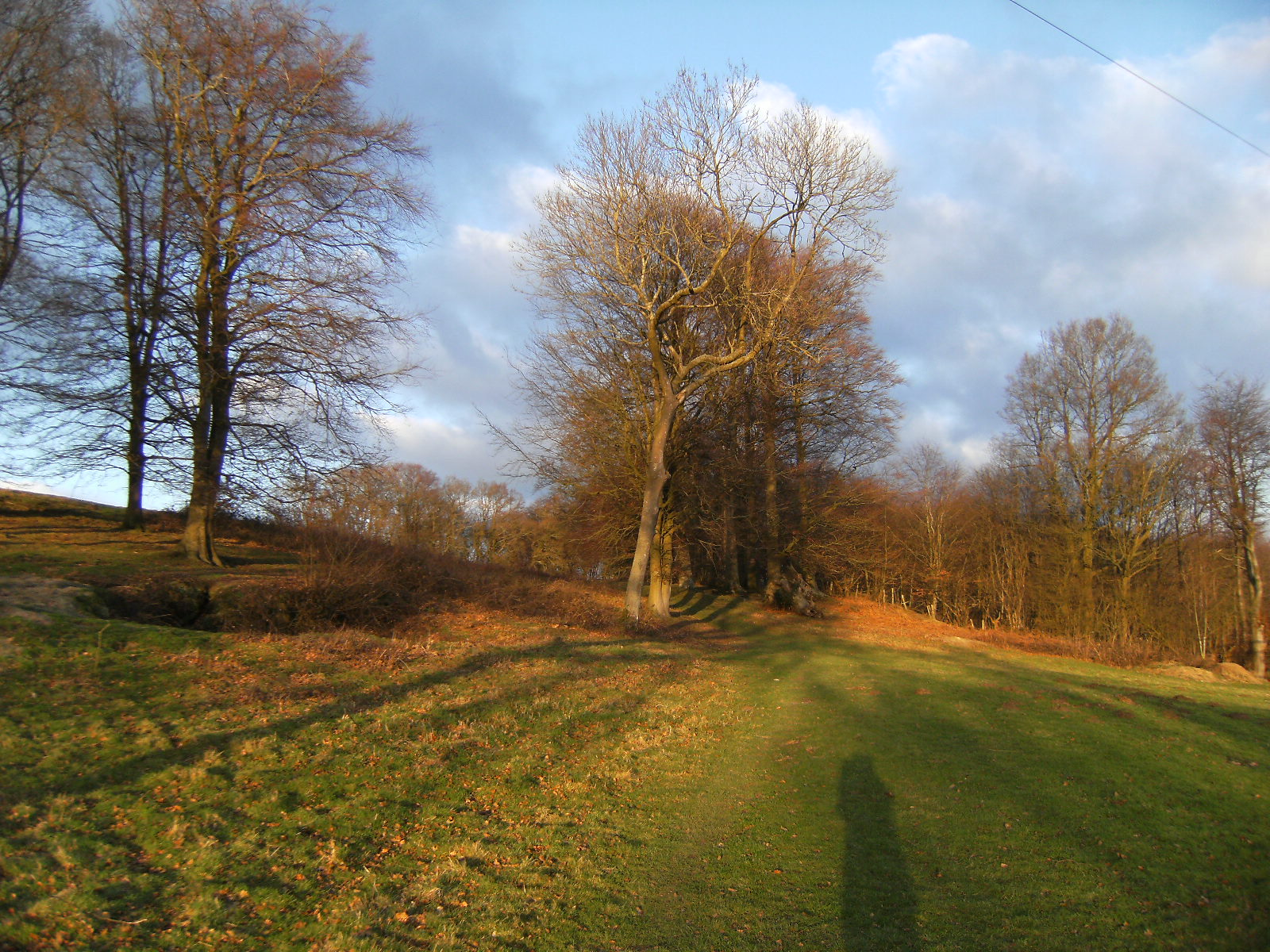 1101280087 Winter sunshine on Highams Wood, near Forest Row