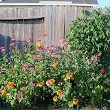 Gardening 2011 - 100_9220.JPG