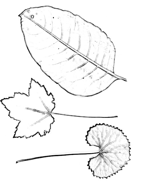 Worksheets Science Of Leaves. Worksheets. Best Free