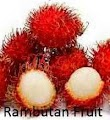The rambutan fruit