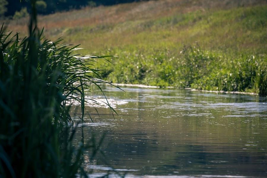 Река Пальна. Ширина 5-15 метров. Глубина от полуметра до двух.