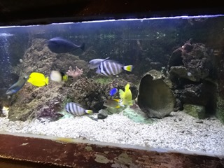 2016.03.14-033 poissons