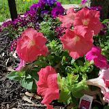 Gardening 2011 - 100_7001.JPG