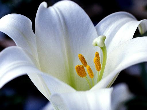 White_flower_wallpaper.jpg