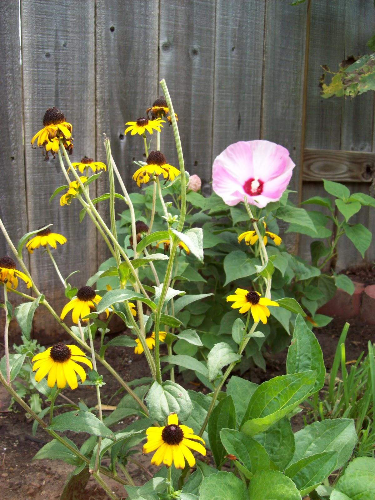 Gardening 2009 - 101_4787.JPG