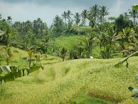 Čudovite riževe terase (Unesco)