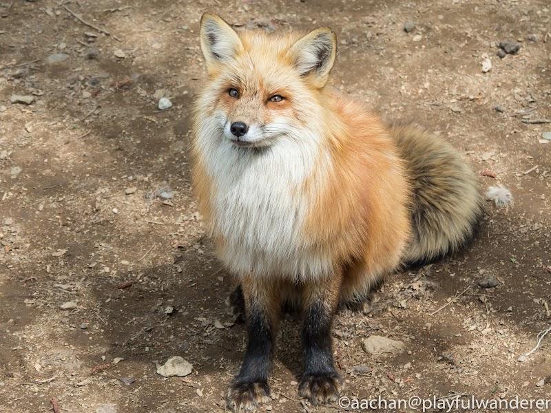 foxvil (37 - 70).jpg