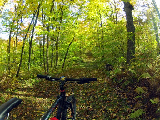 Beautiful fall color on the trails