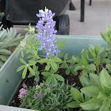 Gardening 2012 - IMG_2849.JPG