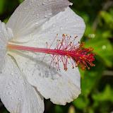 Hawaii 2013 - Best Story-Telling Photos - IMGP8946.JPG
