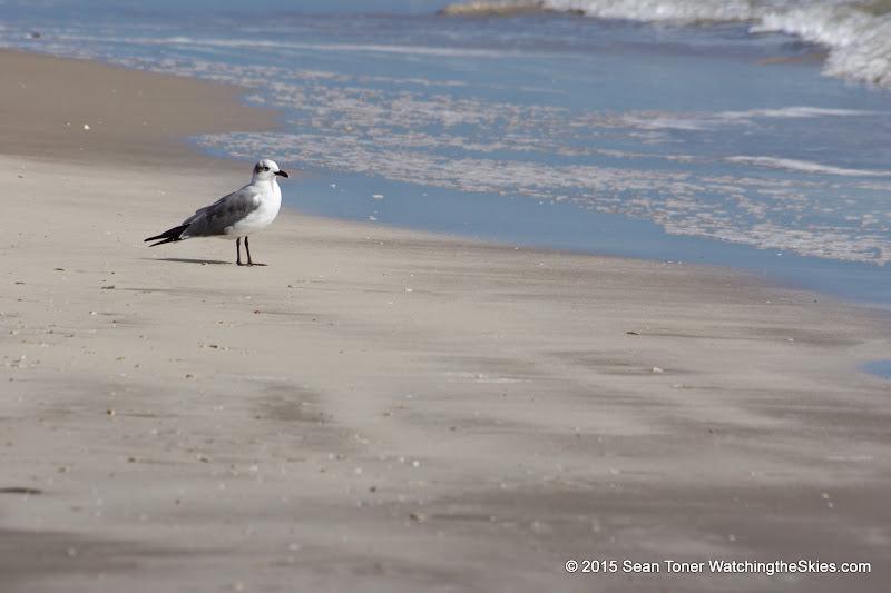 02-07-15 Corpus Christi & South Padre Island - _IMG0434.JPG