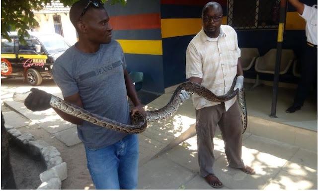 Karisa Iha arrested for smuggling Snakes. PHOTO | PD