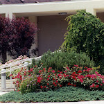 images-Seed and Sod-trees_b14.jpg