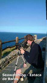 Seawatching - Estaca de Bares