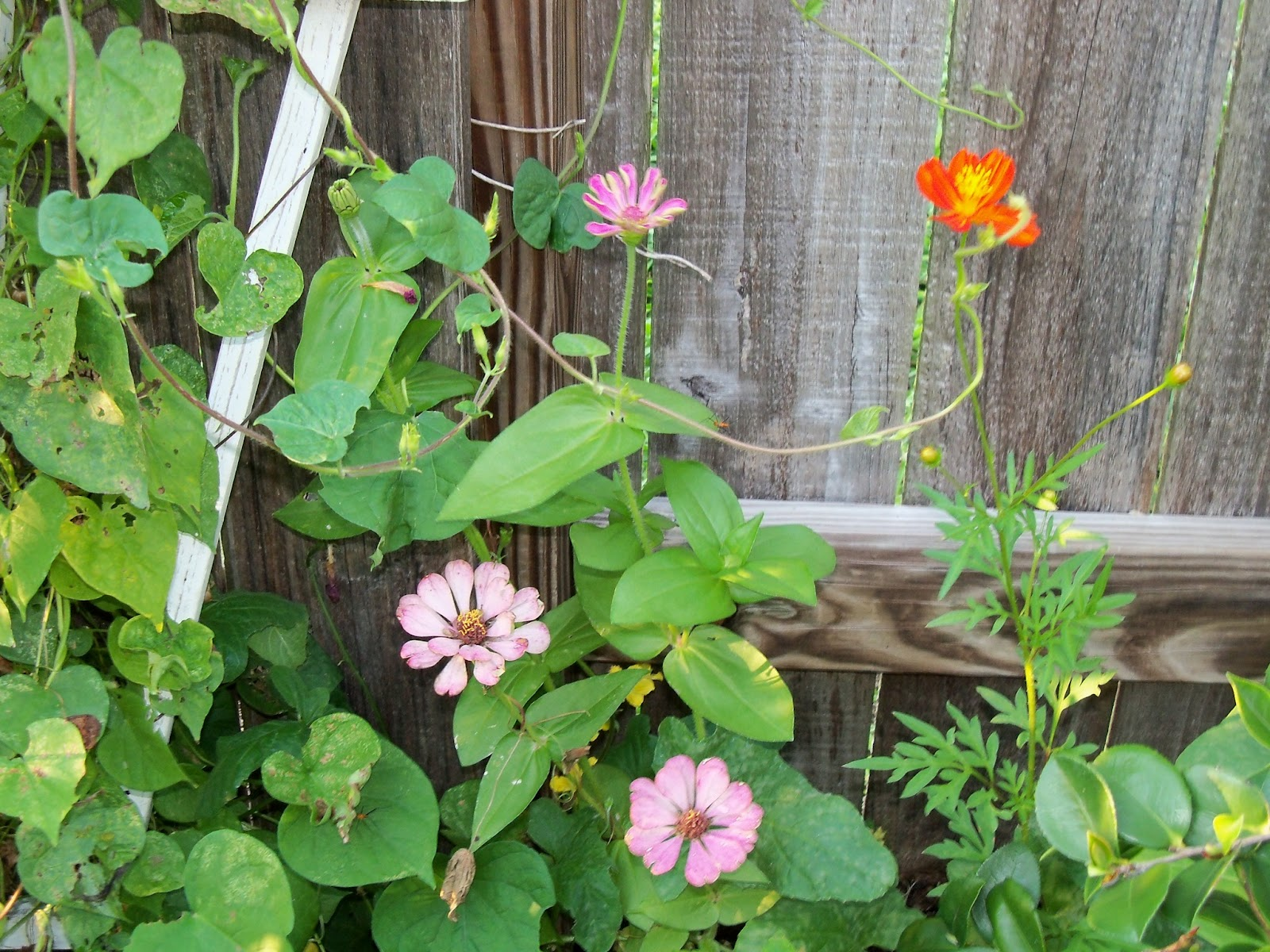 Gardening 2012 - 115_2376.JPG