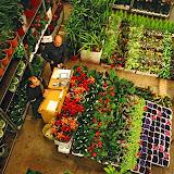 Mercat de Flor i Planta Ornamental de Catalunya - 42280003.jpg