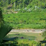 Le Rio Wimbicito près de Tunda Loma (Calderon, San Lorenzo, Esmeraldas), 28 novembre 2013. Photo : J.-M. Gayman