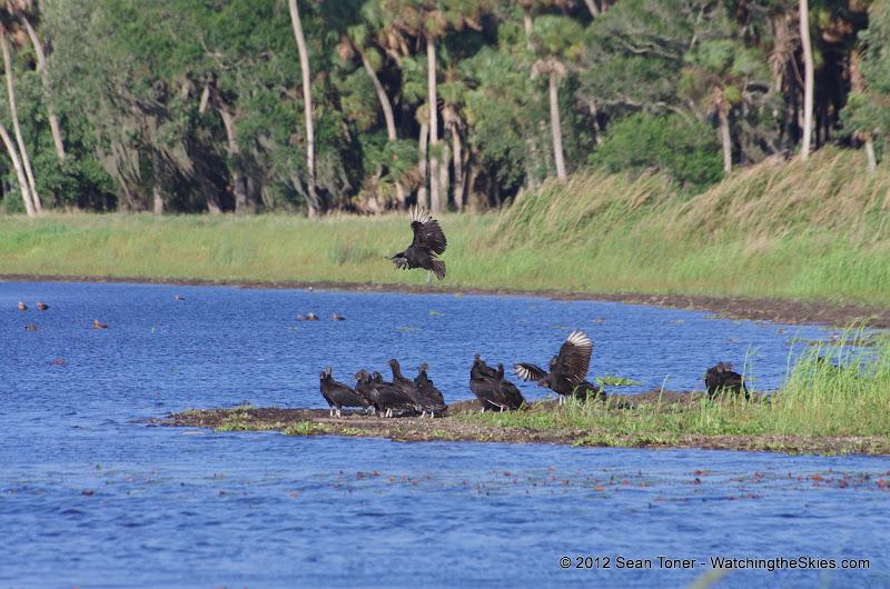 04-06-12 Myaka River State Park - IMGP9917.JPG