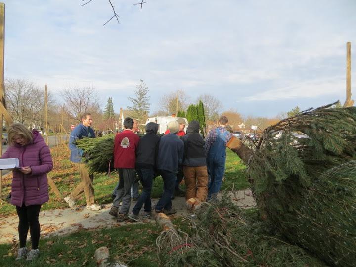 Christmas Tree Lot - IMG_1819.JPG