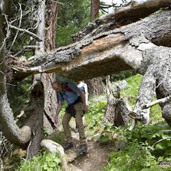 Wanderung Rosengarten 09.06.17-8849.jpg