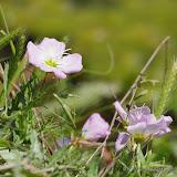 2013 Spring Flora & Fauna - IMGP6411.JPG