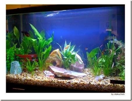 Acquario domestico messa in servizio e manutenzione for Acquario per tartarughe grandi