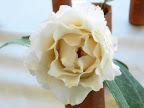 花心帯ピンクの白色 牡丹咲き 中〜大輪