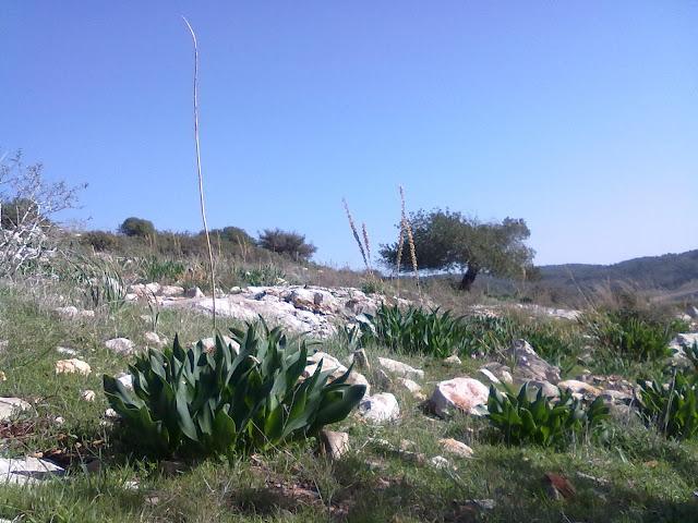 صور جديدة في اول الربيع 05012012114