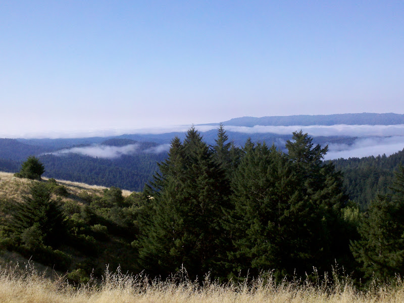 Santa Cruz Mountains Challenge • Skyline Boulevard