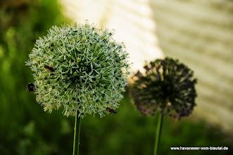 Photo: Viele Insekten finden Nahrung bei uns im Garten.