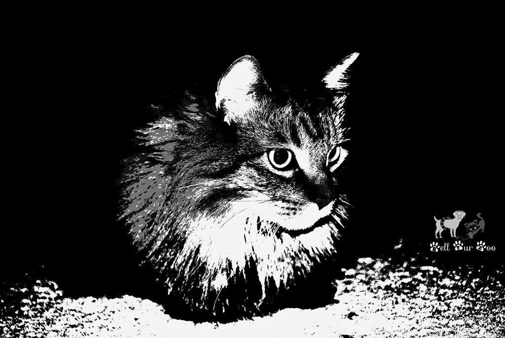 [Matilda+%28Black+%26+White+Bell+Fur+Zoo%29%5B8%5D]