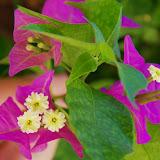 06-17-13 Travel to Oahu - IMGP6860.JPG