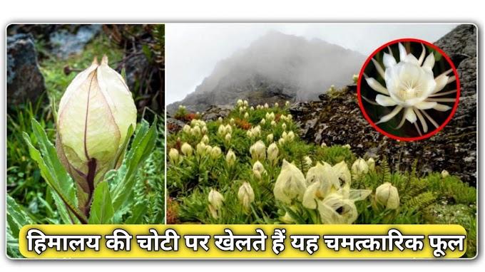 यह फूल 14 साल में केवल एक बार खिलता है, जिसने भी देखा वह हो गया मालामाल