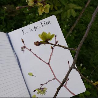 Elm twig :: www.AliceDrawsTheLine.co.uk
