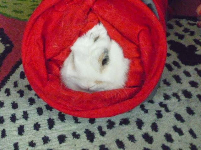 Mirana, lapine blanche-[adoptée] Mirana17